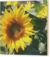Sunflower Visitor Wood Print