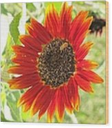 Sunflower With Bee Wood Print