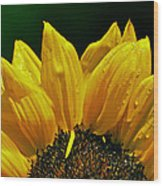 Sunflower With Drops Wood Print