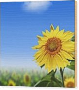Sunflowers, Artwork Wood Print