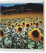 Sunflowers At Dusk Wood Print
