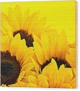 Sunflowers Wood Print by Elena Elisseeva
