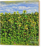Sunflowers In France Wood Print