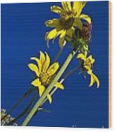 Sunflowers In The Sky Wood Print