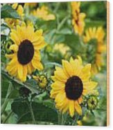 Sunflowers Wood Print by Ivan SABO