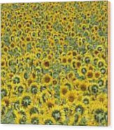Sunflowers Wood Print by Ron Smith