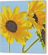 Sunflowers Sky Wood Print