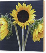 Sunflowers Three Wood Print