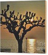 Sunlight And Tree Wood Print