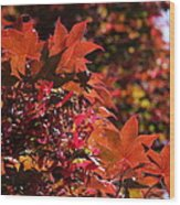 Sunlight Autumn Leaves Wood Print