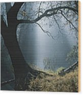 Sunlight Beams Through The Treetops Wood Print