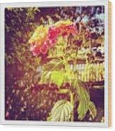 #sunlight #beautiful #flower Wood Print