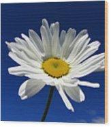 Sunlight Daisy Wood Print