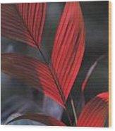 Sunlight Illuminates The Red Leaves Wood Print