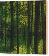 Sunlight In Forest Wood Print