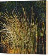Sunlight On Grass Merritt Island Nwr Wood Print