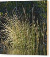 Sunlight On Grass Original Wood Print