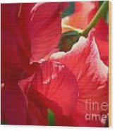 Sunlight On Red Hibiscus Wood Print