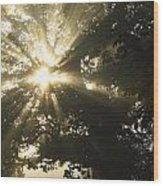 Sunlight Through Tree Cahir, County Wood Print