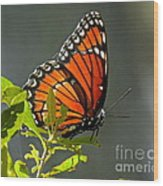 Sunlight Viceroy Wood Print