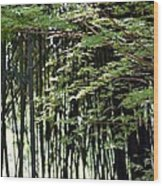 Sunlit Bamboo Wood Print