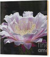 Sunlit Cactus Flower Wood Print