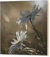 Sunlit Daisies Wood Print