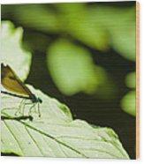 Sunlit Dragonfly Wood Print