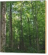 Sunlit Forest Wood Print