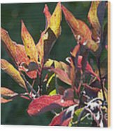 Sunlit Leaves Wood Print