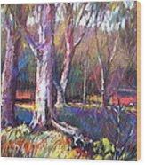 Sunlit Wood Print