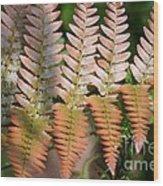 Sunlit Red Fern Wood Print