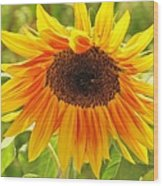 Sunny Bright Sunflower Wood Print
