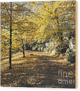 Sunny Day In The Autumn Park Wood Print