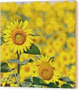 Sunny Disposition Wood Print