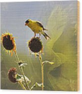 Sunny Finch Wood Print
