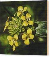 Sunny Floret Wood Print