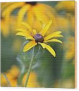Sunny Flower - 2 Wood Print by Marilyn West