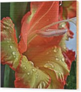 Sunny Glads Wood Print by Susan Herber