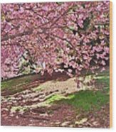 Sunny Patch Under The Cherry Trees Wood Print