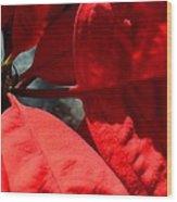 Sunny Poinsettia  Wood Print