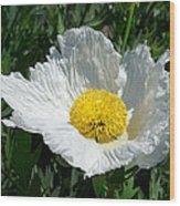 Sunny Side Flower Wood Print