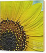 Sunny Summer Sunflower Wood Print