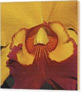 Sunny Yellow Orchid Wood Print