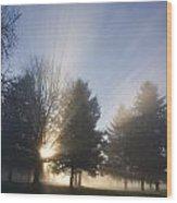 Sunray Through Trees And Fog Wood Print