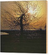 Sunrise And Tree Wood Print