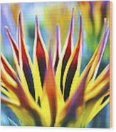 Sunrise Flower Wood Print