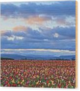 Sunrise Over A Tulip Field At Wooden Wood Print