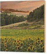 Sunrise Over Field Of Sunflowers Wood Print