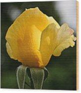 Sunrise Rosebud Wood Print